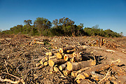 2014/11/23 – Quimili, Argentina: A forest in the area of the Guaycurú Indigenous Community of Bajo Hondo is being chopped down in order to create space for cultivation fields, which most of them are exclusively for soy plantations. The region around Quimili on the Santiago Estero Province is being vastly converted from forestland into fields to produce soy, detroying the habitats for local species and indigenous people. (Eduardo Leal)