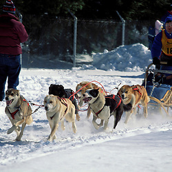 Sandwich Notch 50 sled dog race.  Sandwich, NH