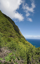 Hawaii: Molokai,  scenic vertical view of cliffs; seafins during Mule Ride..Photo himolo116-72219.Photo copyright Lee Foster, www.fostertravel.com, lee@fostertravel.com, 510-549-2202
