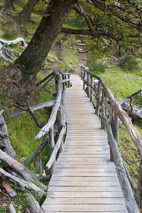 A wooden footbridge leads through a forested area near the Perito Moreno Glacier. The glacier is a popular hiking destination in Los Glaciares National Park, Argentina.
