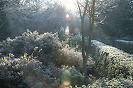 Early sunlight on frost coated branches in the garden at Chiswick House, Chiswick, London, UK
