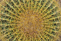 North America, United States, Arizona, Tucson, Arizona-Sonora Desert Museum, Barrel cactus