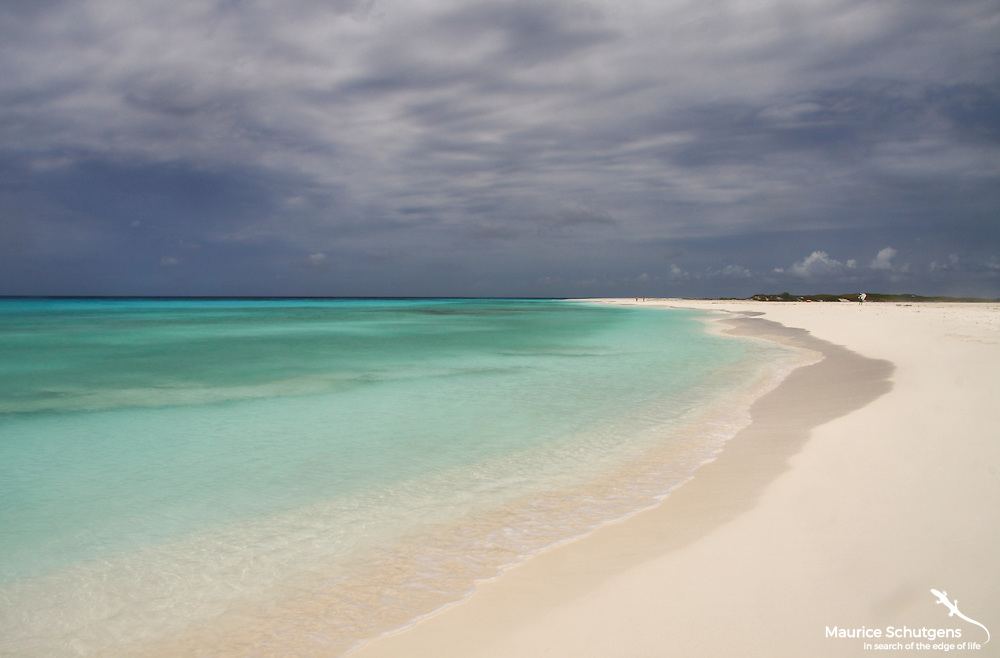 A slice of paradise on Cayo de Agua on the spectacular Los Roques Archipelago of the coast of Venezuela. 300 islands of sun, sea and sand!