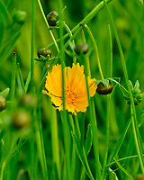 Wildflower meadow. Image taken with a Fuji X-T2 camera and 100-400 mm OIS lens.