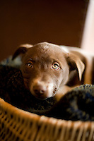 Portrait of young puppy.
