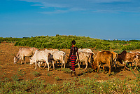 Dassanach tribe woman herding cattle, Omo Valley, Ethiopia.