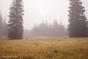 Fog blanketed Muddy Meadows and completley covered Mt Adams.