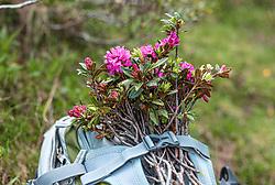 THEMENBILD - ein Alpenrosenstrauß ist auf einem Rucksack festgebunden, aufgenommen am 01. Juli 2019, Kaprun, Österreich // a bouquet of alpine roses is tied to a backpack on 2019/07/01, Kaprun, Austria. EXPA Pictures © 2019, PhotoCredit: EXPA/ Stefanie Oberhauser