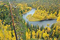 Kitkajoki River in Oulanka National Park, Finland.