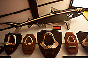Fernando de Noronha_PE, Brasil.<br /> <br /> Parque Nacional Marinho de Fernando de Noronha. Na foto Museu dos Tubaroes.<br /> <br /> Fernando de Noronha Marine National Park in Pernambuco. In this photo Tubaroes museum.<br /> <br /> Foto: JOAO MARCOS ROSA / NITRO