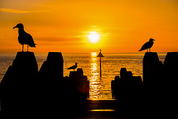© Licensed to London News Pictures. 28/06/2018. Aberystwyth, UK. sunset over Cardigan Bay , Aberystwyth, ends a day of record breaking temperatures across the UK. Photo credit: Keith Morris/LNP