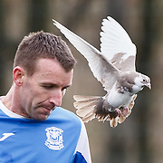Benburb FC player Sinclair Souter has a close encounter with a dove at New Tinto Park, Glasgow during the West of Scotland Cup match versus Glenafton. Picture Robert Perry 27th Feb 20<br /> <br /> Please credit photo to Robert Perry<br /> <br /> FEE PAYABLE FOR REPRO USE<br /> FEE PAYABLE FOR ALL INTERNET USE<br /> www.robertperry.co.uk<br /> NB -This image is not to be distributed without the prior consent of the copyright holder.<br /> in using this image you agree to abide by terms and conditions as stated in this caption.<br /> All monies payable to Robert Perry<br /> <br /> (PLEASE DO NOT REMOVE THIS CAPTION)<br /> This image is intended for Editorial use (e.g. news). Any commercial or promotional use requires additional clearance. <br /> <br /> Copyright 2016 All rights protected.<br /> first use only<br /> contact details<br /> Robert Perry     <br /> 07702 631 477<br /> robertperryphotos@gmail.com<br />   <br /> Robert Perry reserves the right to pursue unauthorised use of this image . If you violate my intellectual property you may be liable for  damages, loss of income, and profits you derive from the use of this image.