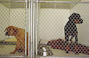 Two dogs await adoption at the Orange Animal Shelter. When the shelter experiences a high number of dogs needing adoption, each kennel/run would be doubled up to save space in the small shelter. A separate building is currently being insulated to house the dogs in cold weather..