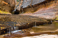 Entrance to the Subway canyon formation Left Fork of North Creek, Zion National Park Utah USA beautiful