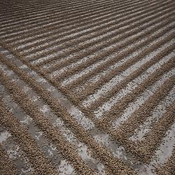 Coffee production, Fairtrade, Guatemala