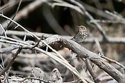 Photographs of Wildlife near The Great Salt Lake