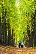 Nederland, Ubbergen, 22-10-2020  Herfstdag in het bos tussen Berg en Dal en Ubbergen. Foto: ANP/ Hollandse Hoogte/ Flip Franssen