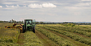 Photo Randy Vanderveen<br /> Grande Prairie, AB<br /> 2020-07-29<br /> Mike Martin cuts down a healthy hay crop south of Spirit River and north of Woking Wednesday afternoon, The crop is made up of anik alfalfa — a non bloating strain — timothy and clover. Martin said he expects he will likely get approximately 5 bales per acre in a year the rain has benefitted forage crops. Nearby canola and pea crops were not looking as healthy due in part to all the precipitation.