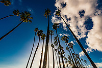 Palm trees  line the bike path between Cabrillo Boulevard and East Beach, Santa Barbara, California USA.
