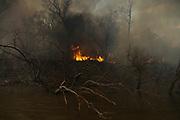 Los incendios están destruyendo uno de los ecosistemas más importantes de América Latina, los Humedales del Delta del Paraná. En sólo unos meses, el fuego destruyó más de 400.000 hectáreas, lo que equivale aproximadamente a 16 ciudades de Buenos Aires.<br /> <br /> Sin duda, esta situación deja a las familias que habitan este ecosistema en situación de vulnerabilidad, ya que respiran aire contaminado por el humo.