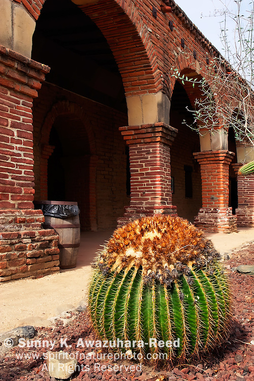 Cactus garden and Arched colonnades of the West Wing