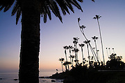 Palm trees are silhouetted at sunset along the bluff above the beach in Laguna Beach, California.