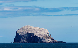 View of Bass Rock coloured white as a result of nesting gannets, Firth of Forth, Scotland, UK