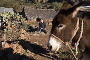 A young boy, sitting on the ground near a donkey, mends his lasso at Rancho Santa Teresa, Baja California Sur, Mexico on January 30, 2009. As in the other ranches high in the Sierra de San Francisco, the primary occupation is herding goats for cheese and meat, so boys learn at a young age how to use a lasso.