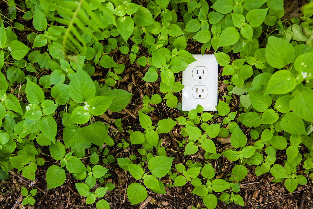 A power outlet in the ground surrounded by green plants on the forest floor. A green energy conceptual shot.