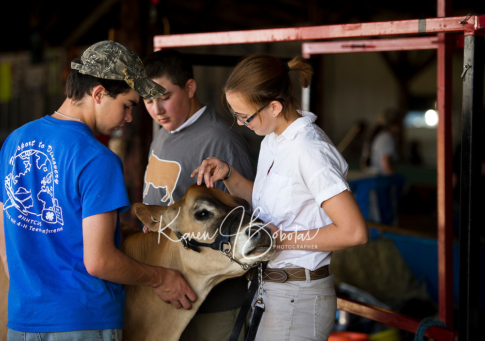 """Joe Garcia, Patrick Marcoux and Makenzie Pepper work together to prep """"Flame"""" a summer yearling for the Fit and Show, Herd and Breed competitions at the Belknap County 4H Fair Saturday morning.   (Karen Bobotas/for the Laconia Daily Sun)"""