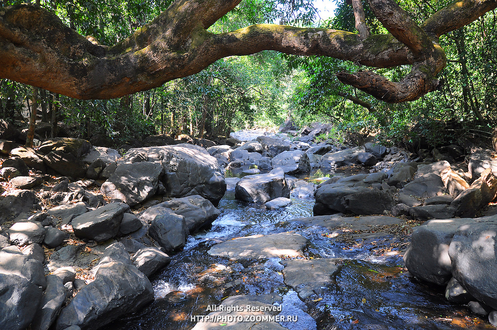 Small mountaineous river (creek) with waterfall in forest