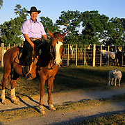 South America, Uruguay, Florida, An authentic gaucho and his trusty horse on a working ranch.