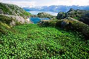 Alaska. Southeast. Juneau.  Alpine view, pond, Douglas Island, view of Admiralty Island.