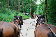 Germany, Bavaria, Schwangau Old style horse and carriage