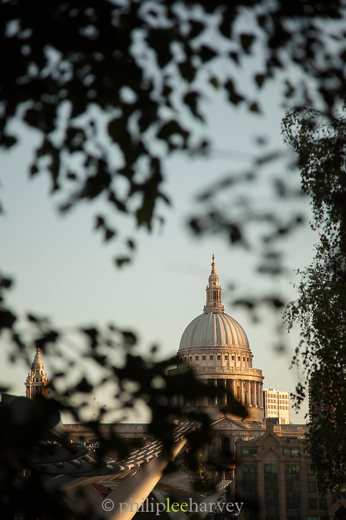 St Paul's Cathedral seen through branches, London, England, UK