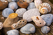 Collection arrangement of shells and other objects macro close up
