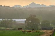 Mount Hope, New York - Horses and fog at Hidden Lake Farm on May 11, 2013.
