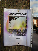 Poster pinned to tree to inform the local community of a lost cat in Highgate, London, United Kingdom.
