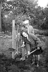 """Environment Secretary Nicholas Ridley and his wife, Judy, plant """"The Ridley Oak"""", an eight-year-old Quercus Robur species, in Richmond Park to mark the start of the Government's programme of replacing the 5,000 trees that were damaged or uprooted in Royal parks during the recent hurricane."""