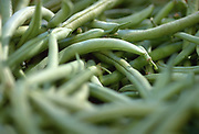 Close up selective focus photograph of a group of Green beans