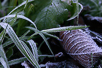 Frost covered grass and leaf in an Irish garden