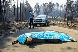 June 18, 2017 - Portugal - Figueira dos Vinhos, 18/06/2017 -  Umas da vitimas do incêndio no Pedrogão Grande sob guarda de um agente da GNR perto do IC8 perto da aldeia Nodeirinho. Pelo menos 62 pessoas morreram no incêndio que atinge Pedrógão Grande e outros dois concelhos do distrito de Leiria desde sábado, disse hoje o secretário de Estado da Administração Interna. (Credit Image: © Atlantico Press via ZUMA Wire)