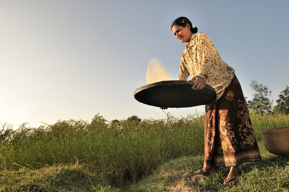 Mean Ounch, 50, winnows rice from her field in Sretreng, a village in the Kampot region of Cambodia.