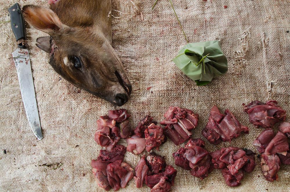 Bushmeat<br /> Peter's duiker (Cephalophus callipygus)<br /> Mbomo market<br /> Road Brazzaville to Mbomo (N2)<br /> Republic of Congo (Congo - Brazzaville)<br /> AFRICA