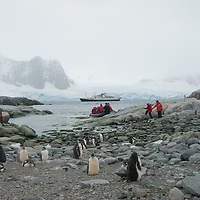 Passengers from the National Geographic Endeavor explore a Gentoo Penguin rookery on Petermann Island, Antarctica.