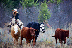 Cowgirl, Cydnie Clark working cows in Alpine Wyoming.  <br /> <br /> My photos are not to be used for anti public land ranching interests. The cowboys of the west are under assault because many don't like to see their cows on public land. I have written a couple of articles articulating the problem.