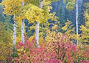 Brilliant Autumn Portrait, Southeast Idaho