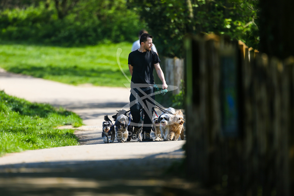A dog walker takes his charges along a sunlit pathway on Parliament Hill in London. February 10 2018.