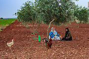 General picture shows the livelyhood atmosphere of two old ladies of Marea sitting next to an olive tree on Sunday, June 24, 2012.  It is the largest town and administrative centre of the Mare' nahiyah in the Azaz District. Located some 25 kilometers north of the city of Aleppo, the town has a population of 16,904 as per the 2004 census. (Photo by Vudi Xhymshiti)