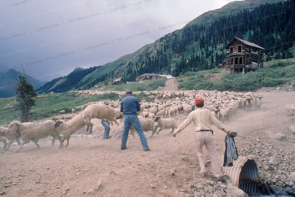 Cowboys counting sheep in Animas Forks,  a ghost town in Colorado near the Early Bird Mine.